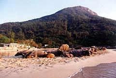 Búfalos delante de la casa de la playa